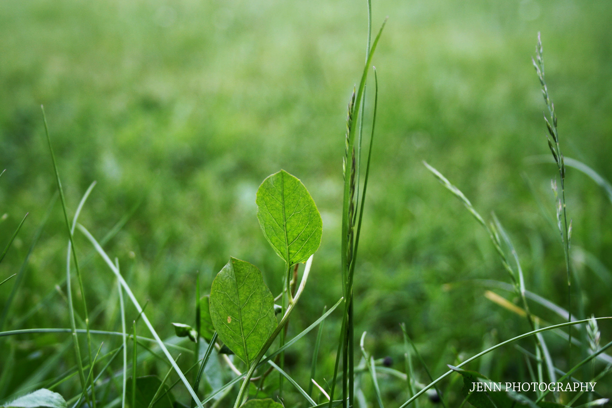 Photograph GRASS WITHOUT SUNLIGHT by Jennifer Timmermans on 500px