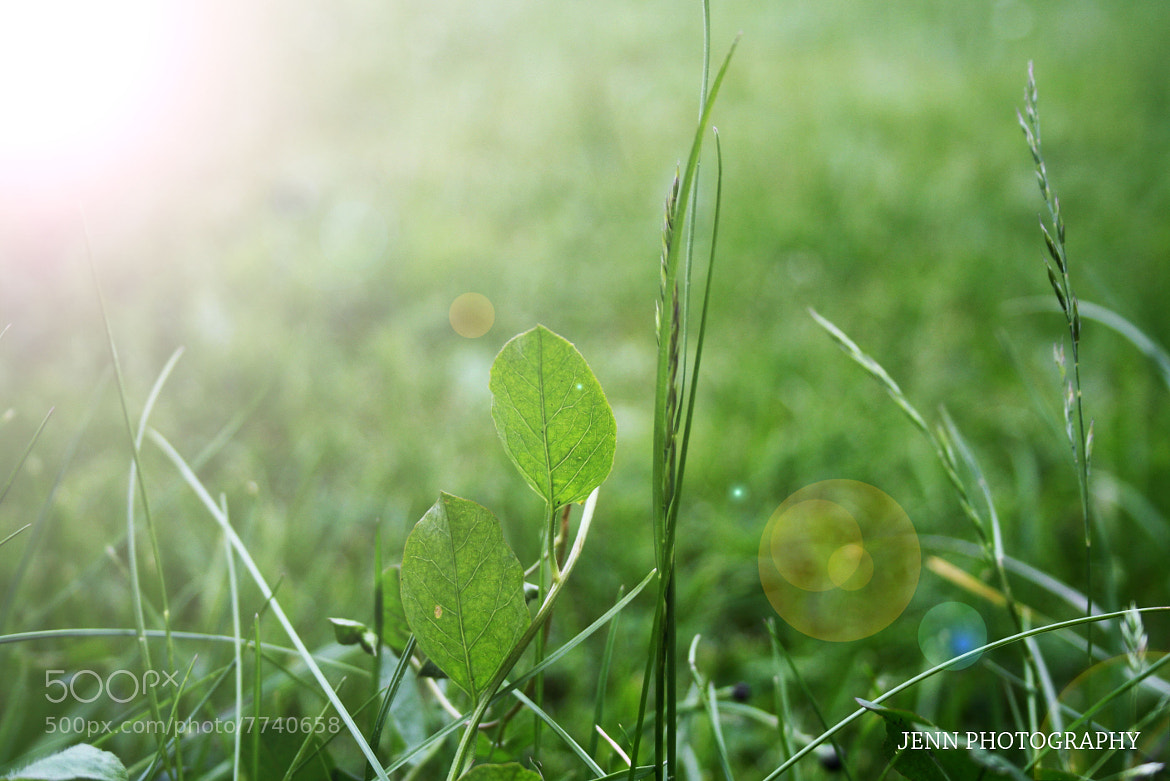 Photograph GRASS WITH SUNLIGHT by Jennifer Timmermans on 500px