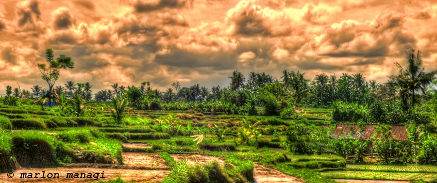 Photograph My Rice Field In HDR by Marlon Managi on 500px