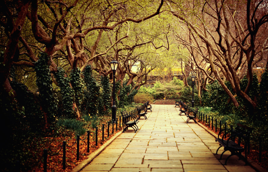 Photograph Urban Forest Primeval - Central Park - New York City by Vivienne Gucwa on 500px