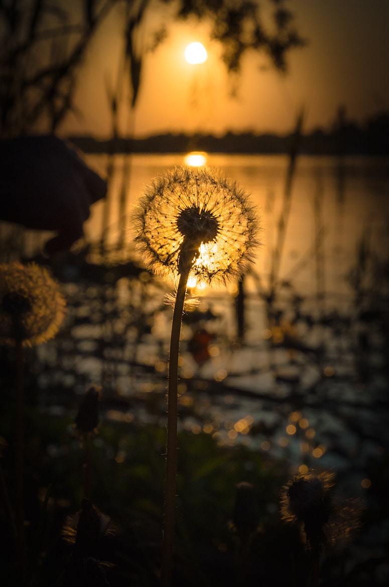 Photograph We all watch the sunset by Iulius Anghelina on 500px