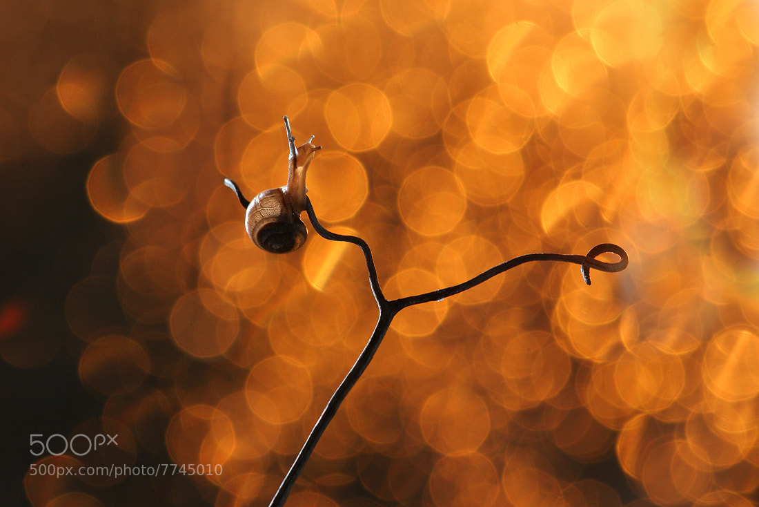 Photograph Golden snail by Vadim Trunov on 500px
