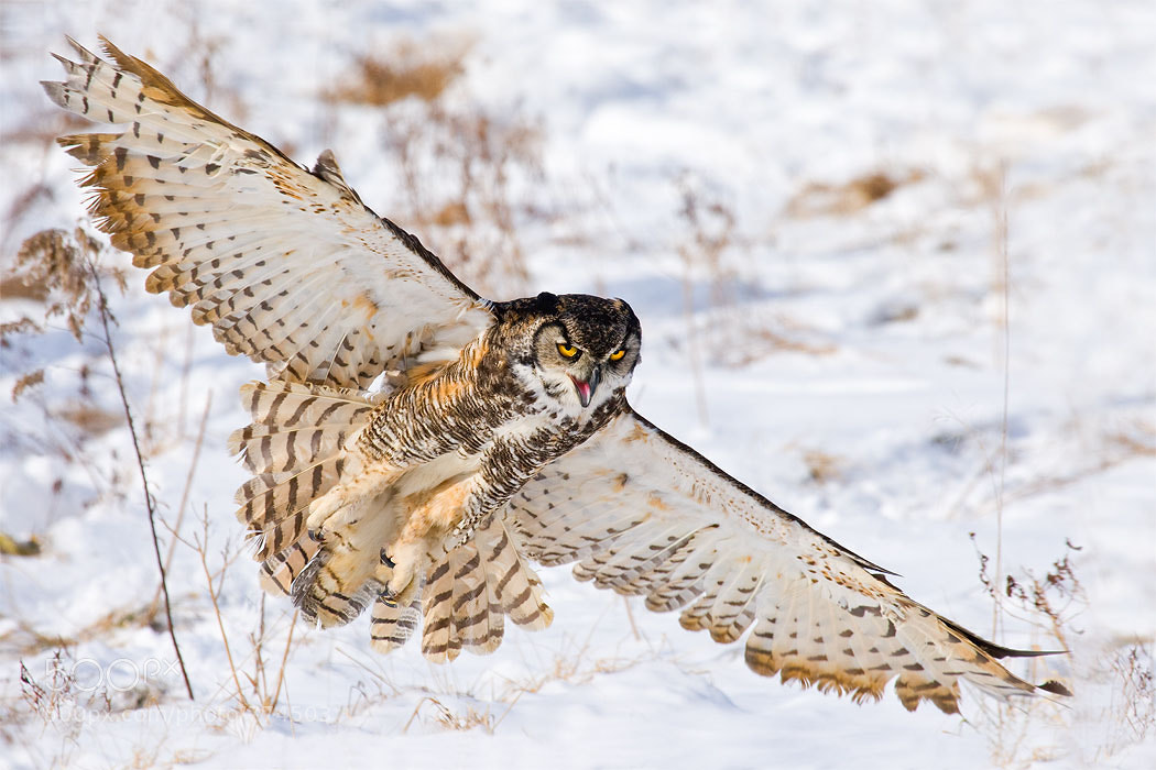 """Photograph """"Predatorial"""" Pursuit by Stephen Oachs on 500px"""