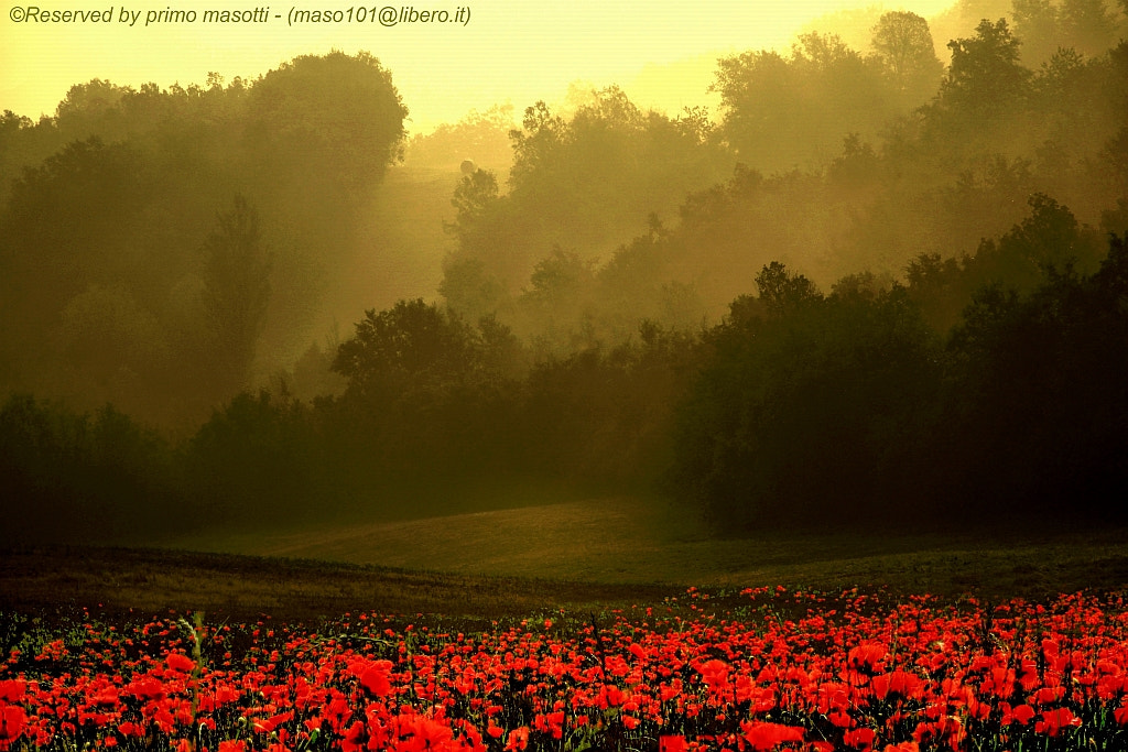 Photograph a new day, another spring -  (Montombraro zocca modena ) -_3447 - DVD 15 by primo masotti on 500px