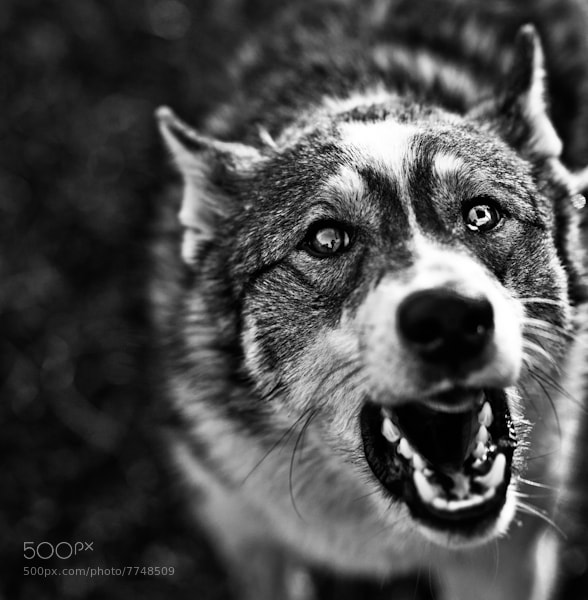 Photograph Dog. Black life. by Igor Mokhovyk on 500px