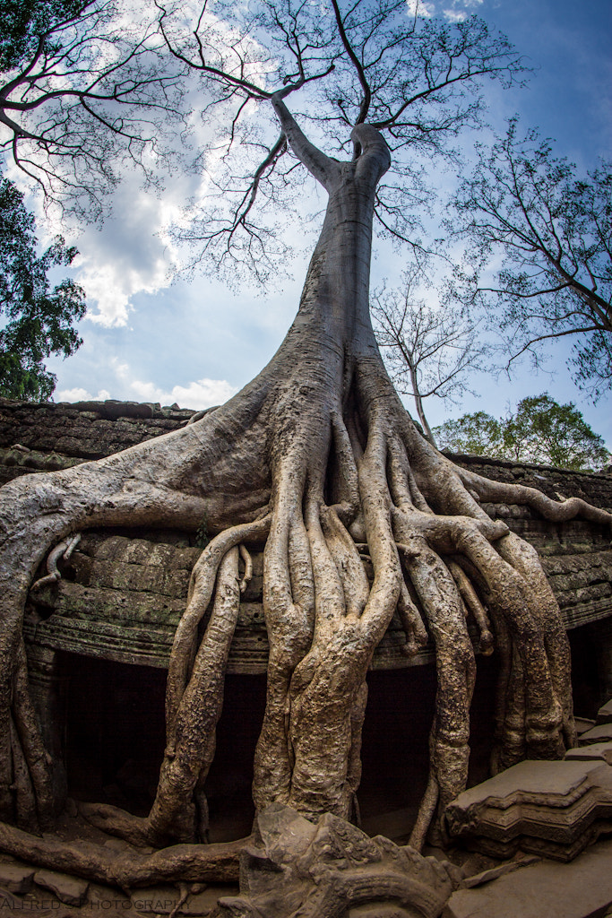 Photograph Ta Phrom by Alfred Lim on 500px