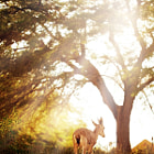 ������, ������: Goat in wonderful forest