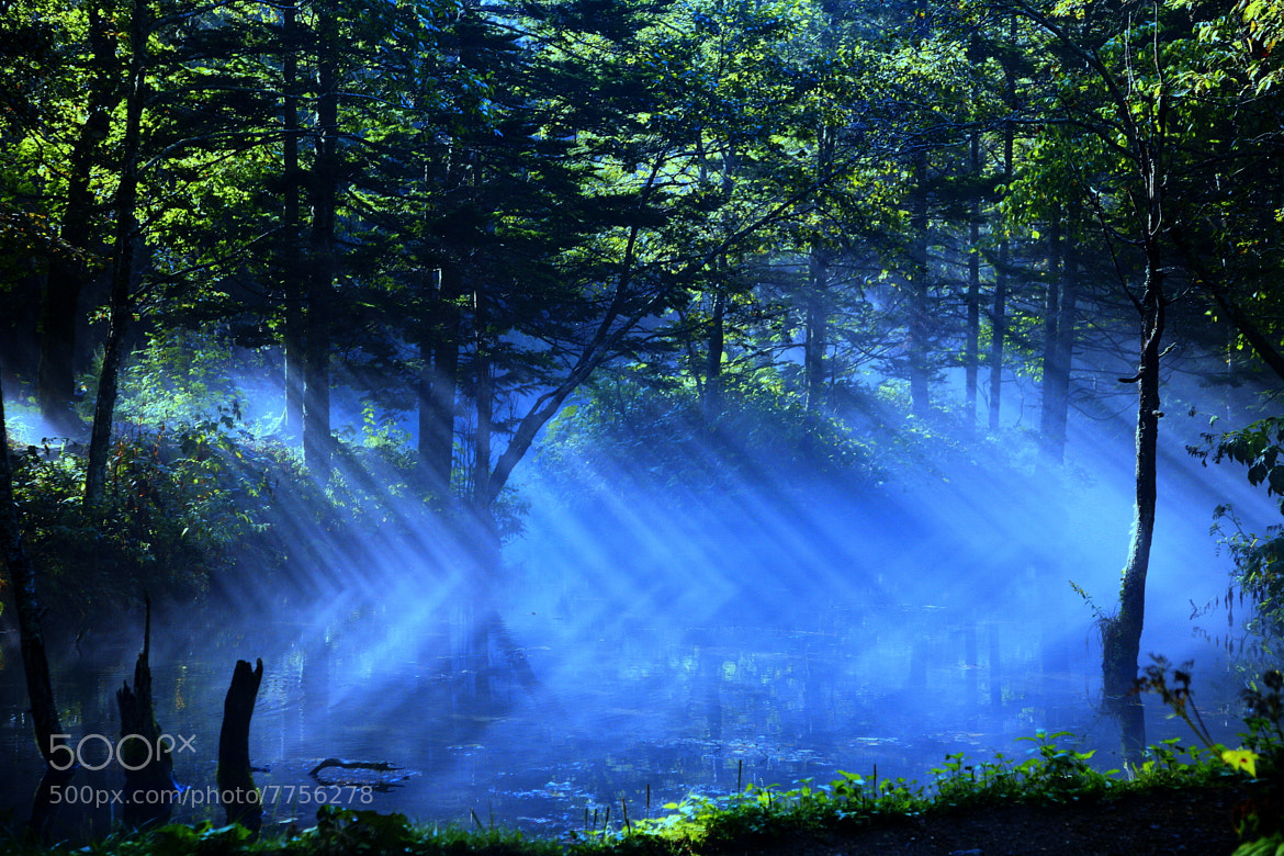 Photograph Dance of Light  by yume . on 500px
