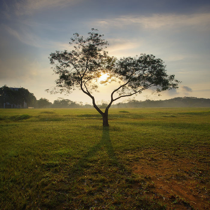 Photograph Eldertree by WK Cheoh on 500px