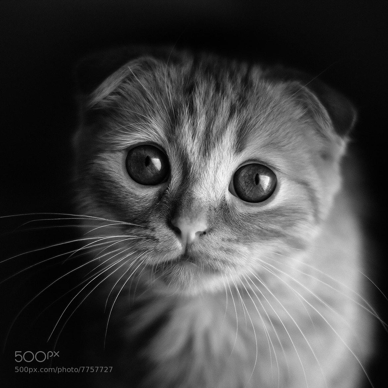 Photograph Cat by Dmitry Nikitin on 500px