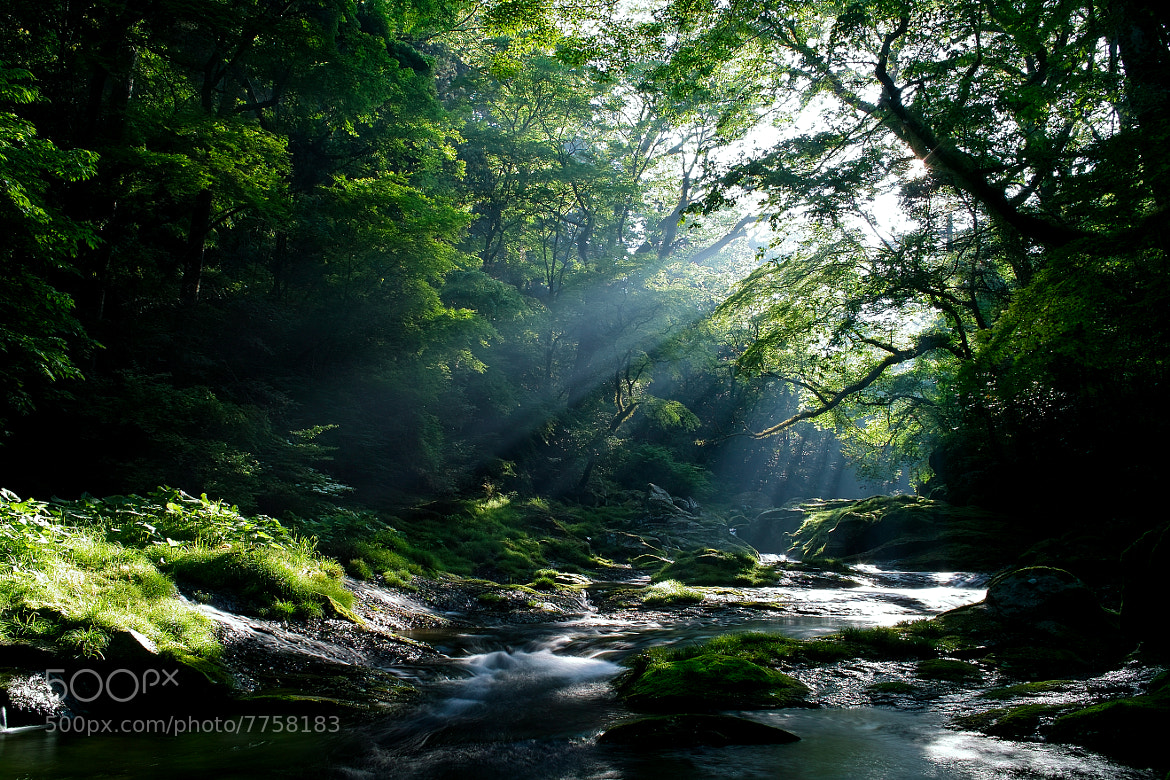 Photograph Shiny Forest by Junya Hasegawa on 500px