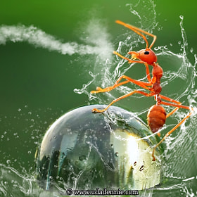 Kungfu Ant by Uda Dennie (udadennie)) on 500px.com