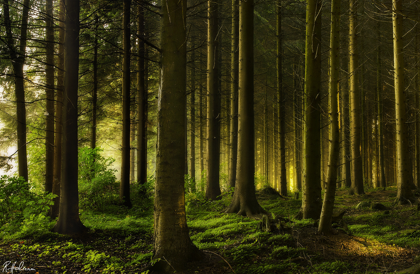 Photograph Grimms Forest by Robin Halioua on 500px
