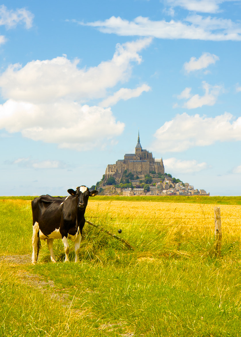 Photograph Mont Saint Michel @ Lonely cow by Wesley Vercammen on 500px