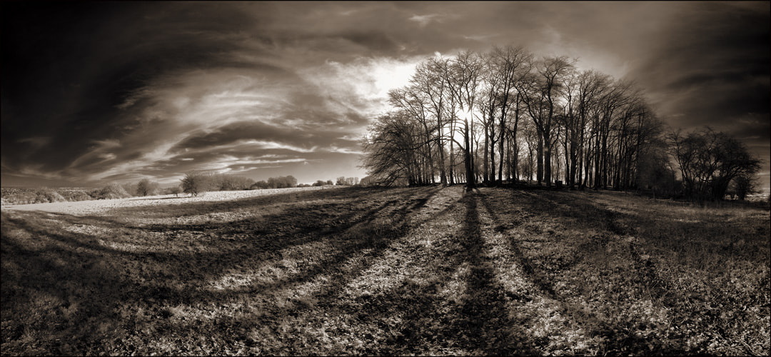 Photograph Distant Trees by Richard Gadd on 500px