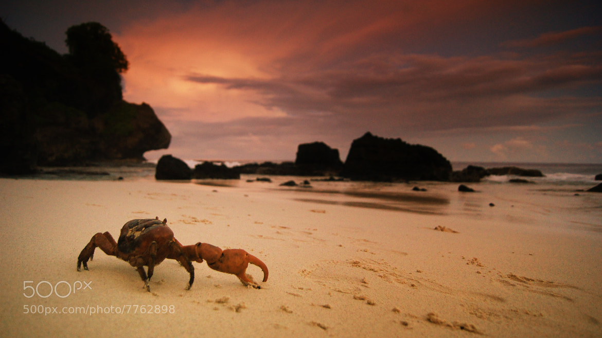 Photograph Christmas Island crab by Simon Jennings on 500px