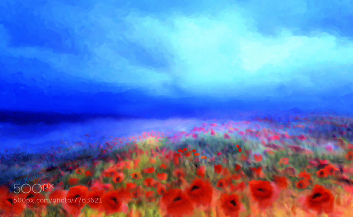 Photograph Poppies in the mist by Valerie Anne Kelly on 500px
