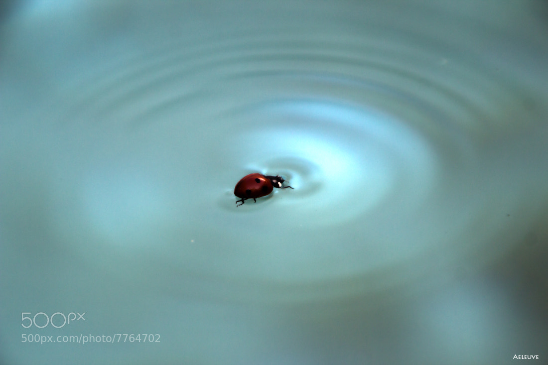 Photograph ladybug swimmer by Alvaro Ramirez on 500px