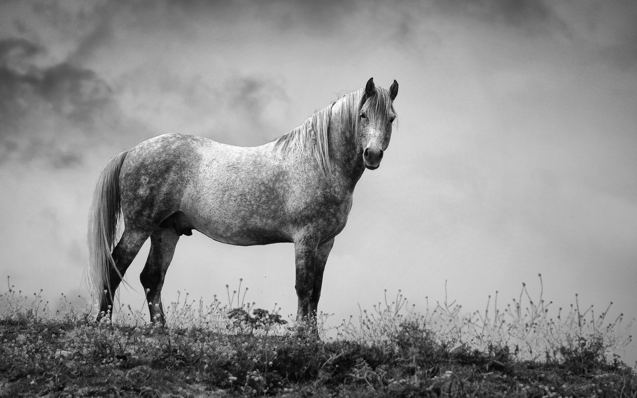 Photograph King of the hill by Adrià Vidal on 500px