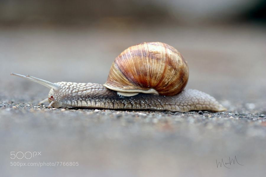 Photograph Snail on a Mission by Monica Winkler on 500px