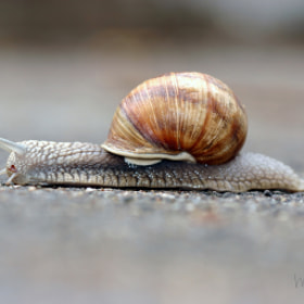 Snail on a Mission by Monica Winkler (monicawinkler)) on 500px.com