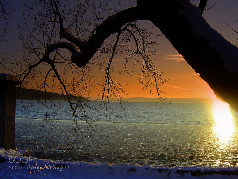 Photograph Tangerine Dream by Monica Winkler on 500px