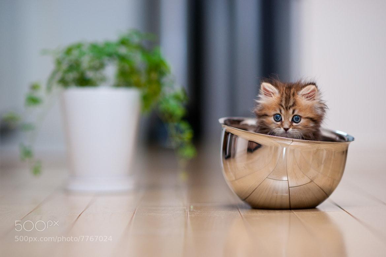 Photograph Bowl Cat by Ben Torode on 500px