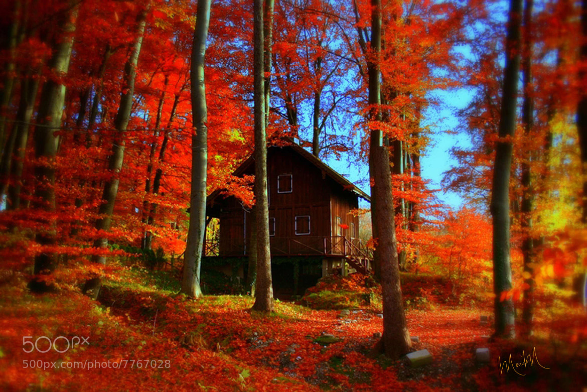 Photograph Autumn Leaves by Monica Winkler on 500px