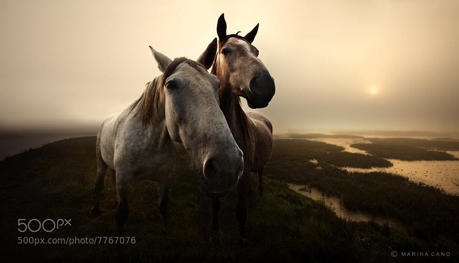 Photograph Misty Sunrise by Marina Cano on 500px