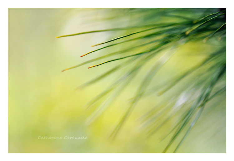 Photograph Vert nature II by Catherine Cerezuela on 500px