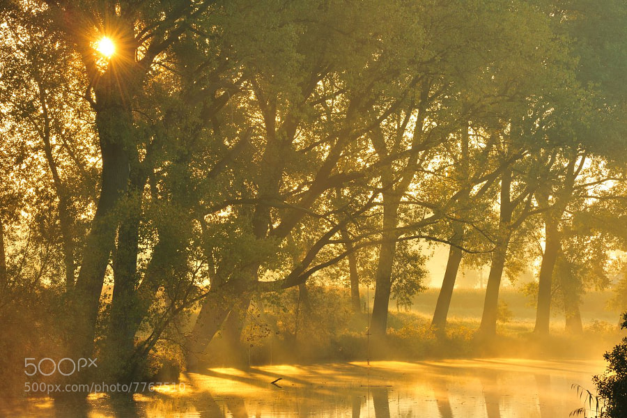 Photograph Golden river morning by Yves Adams on 500px