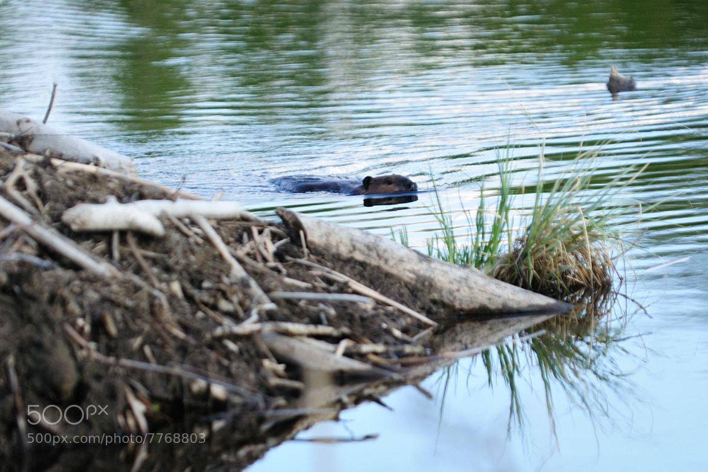 Photograph Evening swim by Sylvia L on 500px