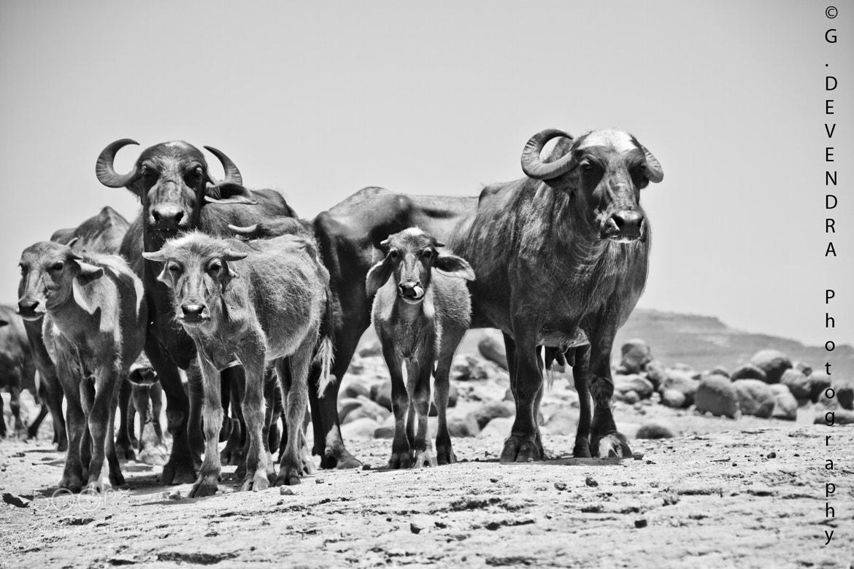 Photograph family by Devendra Gokhale on 500px