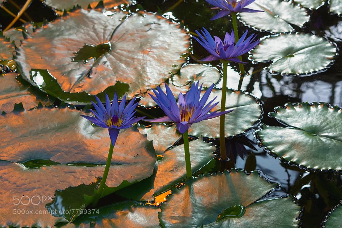 Photograph Flowery water by Stefan Steinbauer on 500px