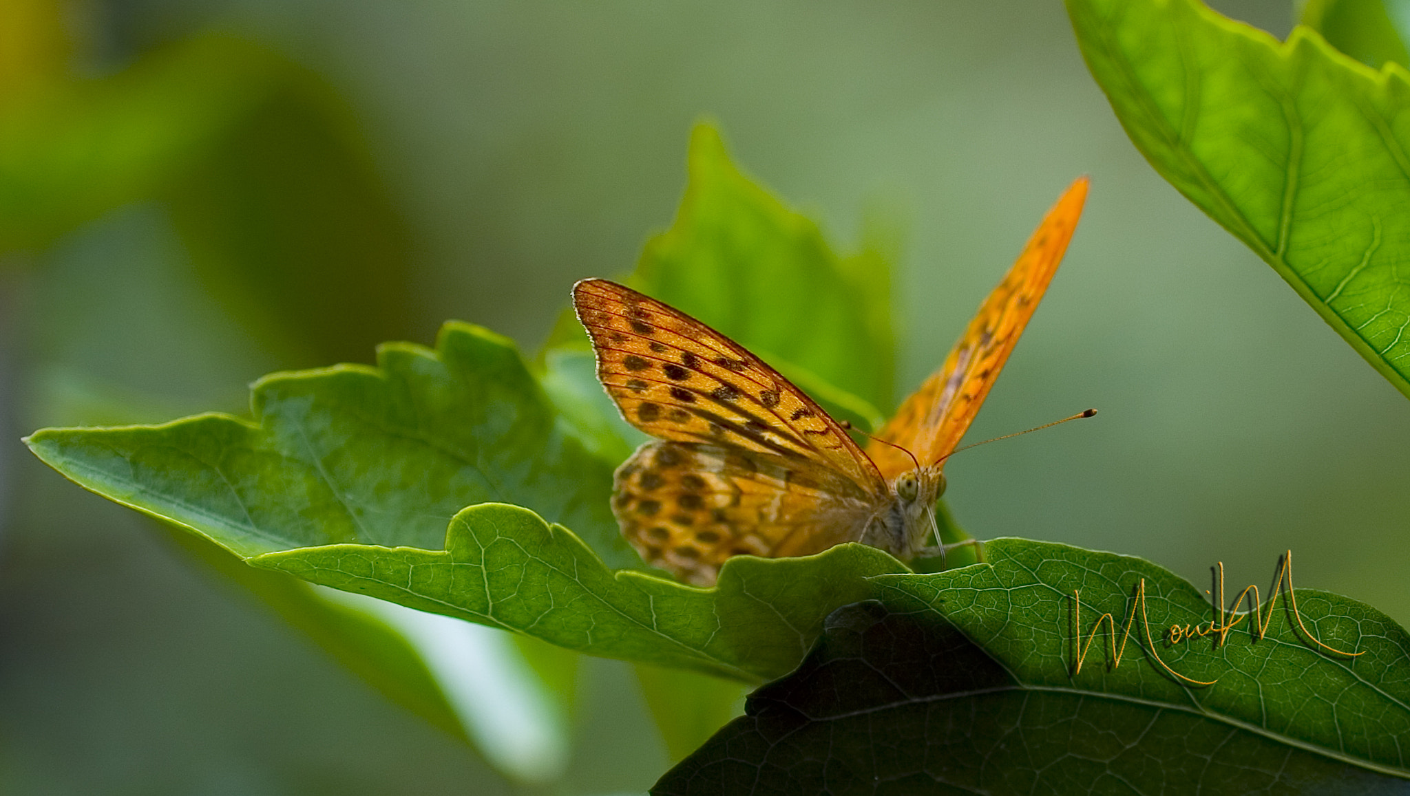 Photograph Butterfly takes a Peek by Monica Winkler on 500px