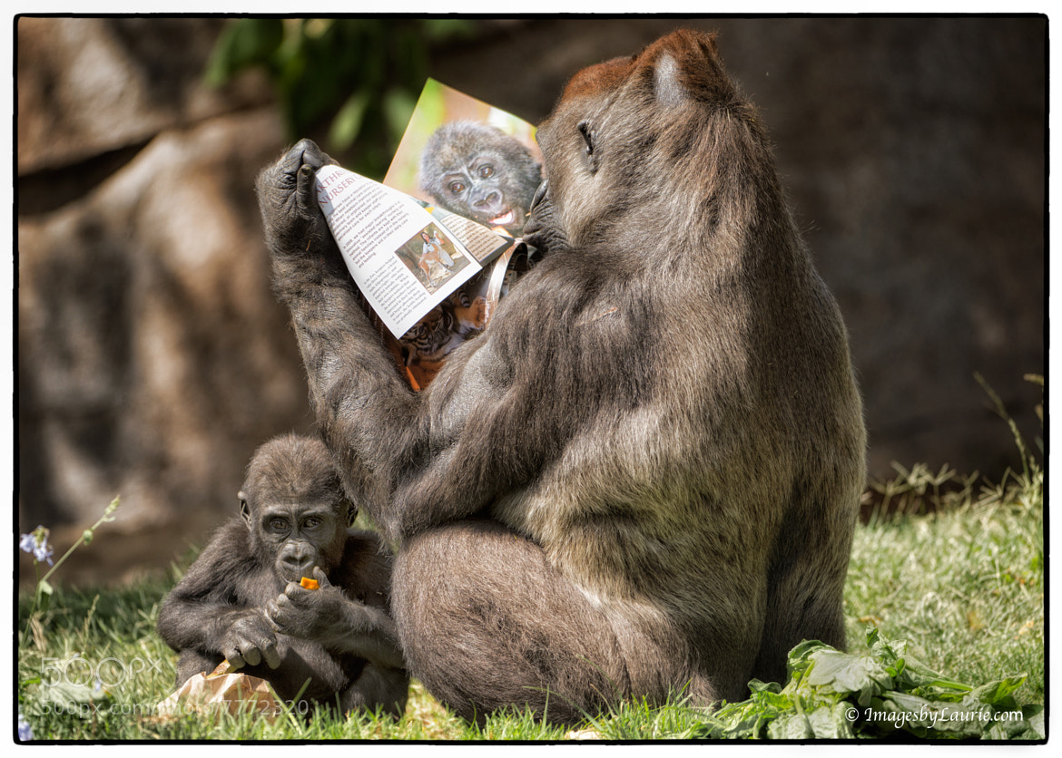Photograph Read to your kids by Laurie Rubin on 500px