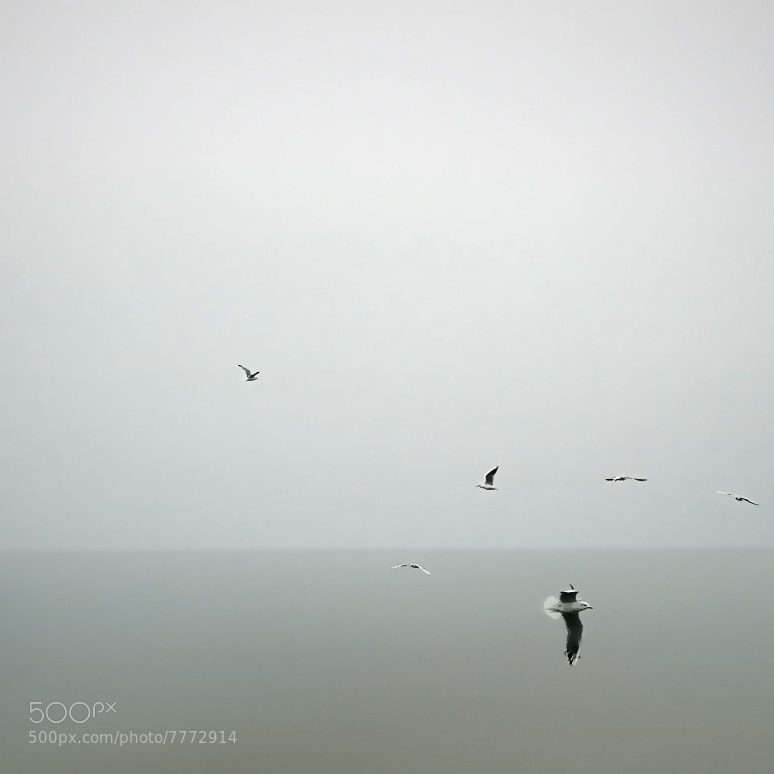 Photograph seagull by Nino  C.J. on 500px