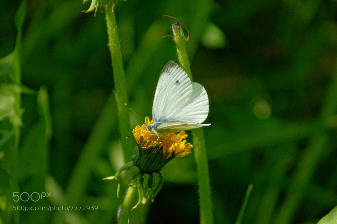 Photograph White green and yellow by Grigory Nesvetaev on 500px