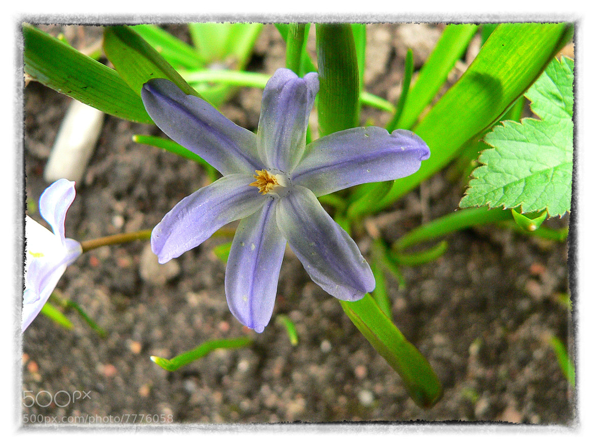 Photograph Wild flower. by Lappeen Ranta on 500px