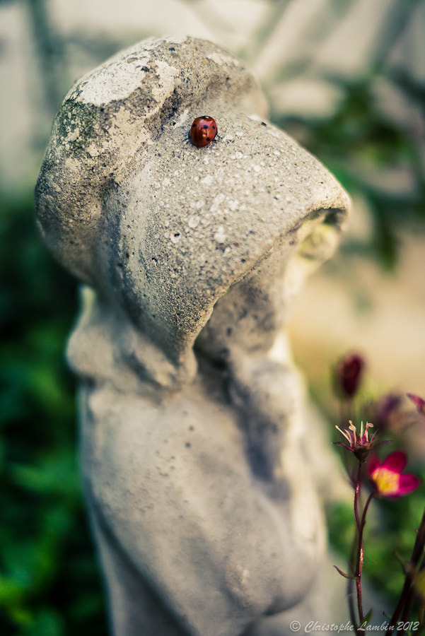 Photograph Ladybug by Christophe Lambin on 500px