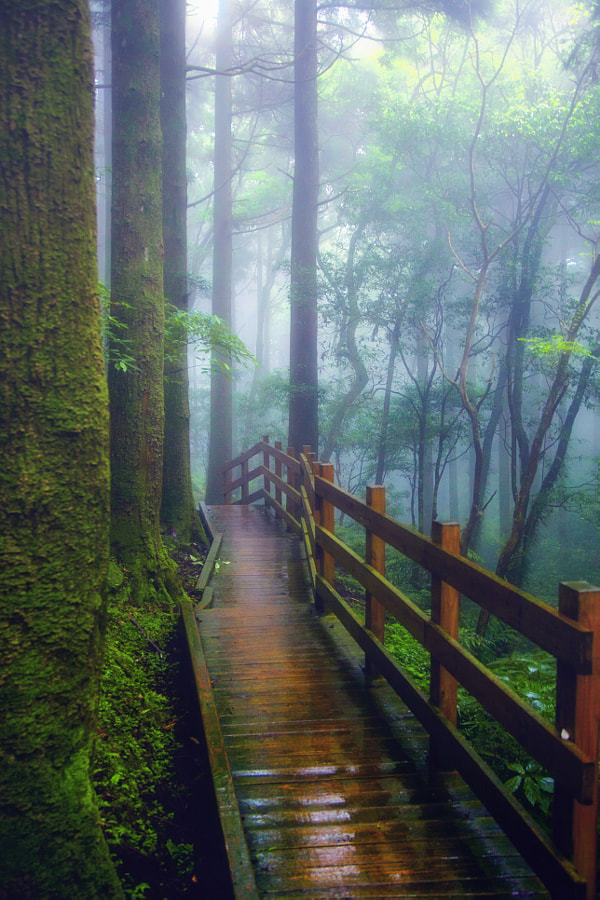 Photograph The wet wooden path by Hanson Mao on 500px