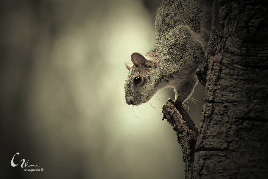 Photograph Little squirrel by Criss Garcia on 500px