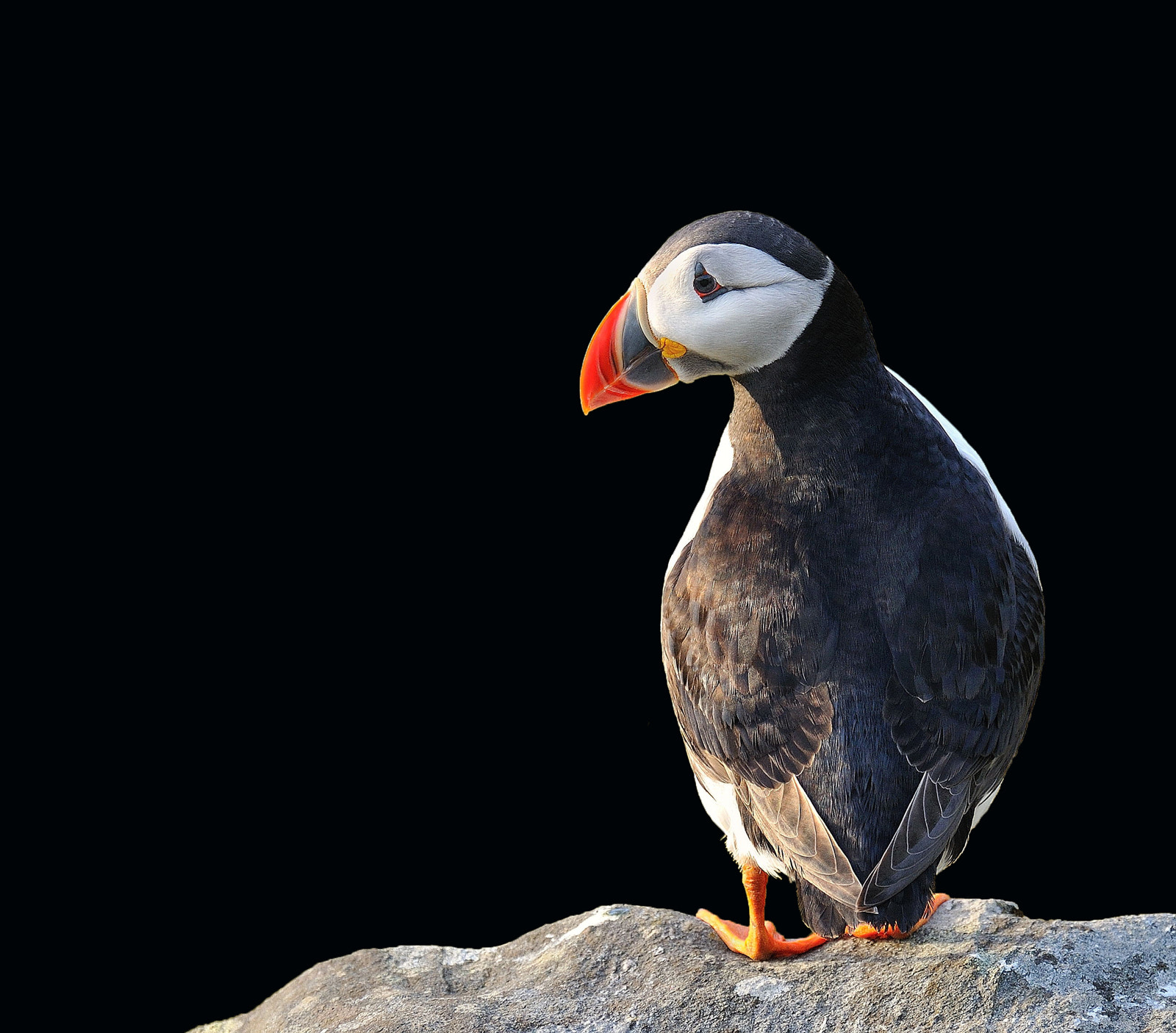 Photograph Puffin by Ronnie Bergström on 500px