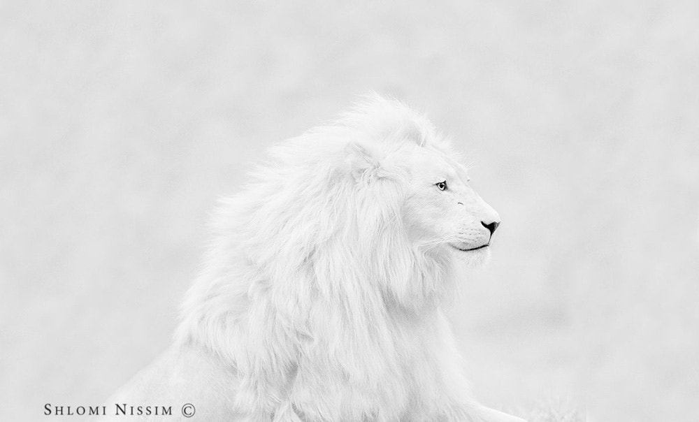 Photograph THE GREAT WHITE (panorama)  by shlomi nissim on 500px