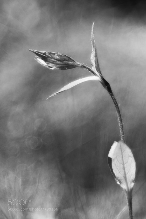 Photograph monochrom flower in forest by Manfred Huszar on 500px