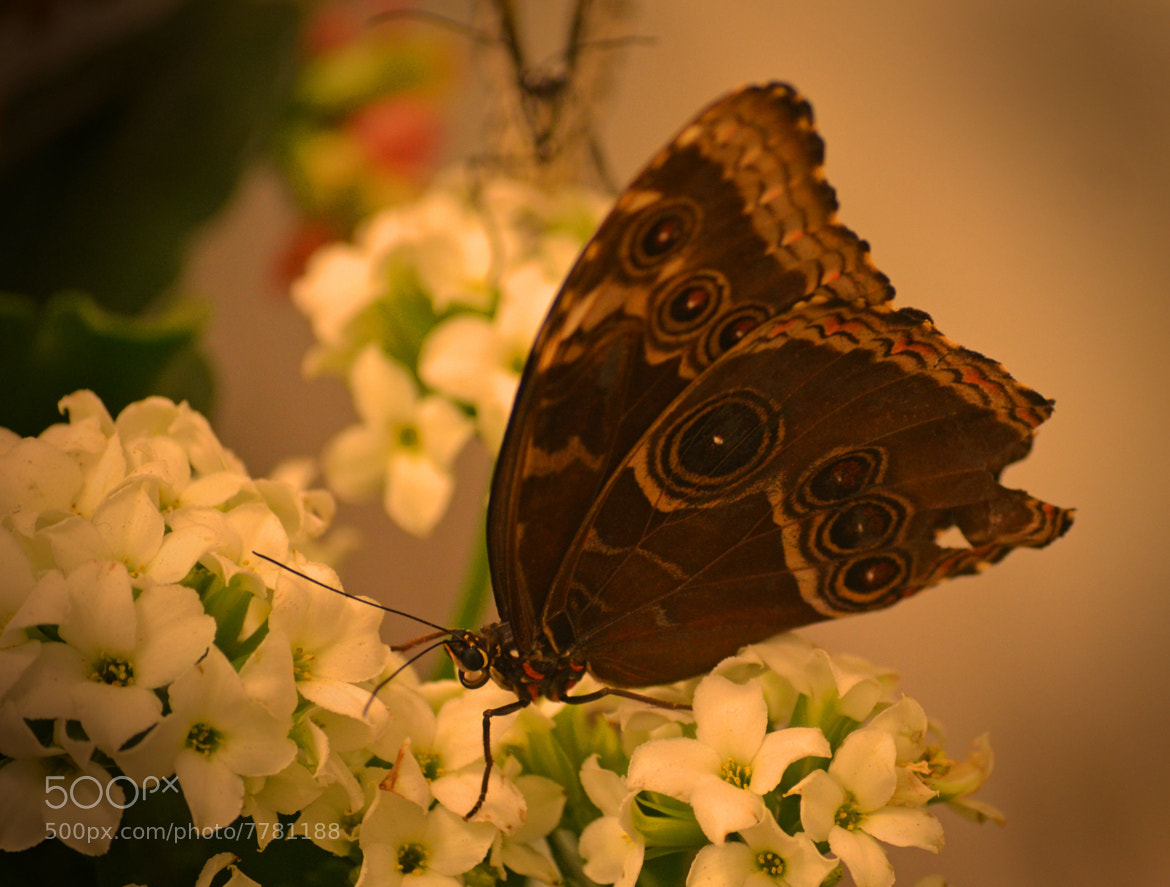 Photograph Butterfly by Youngman Images on 500px