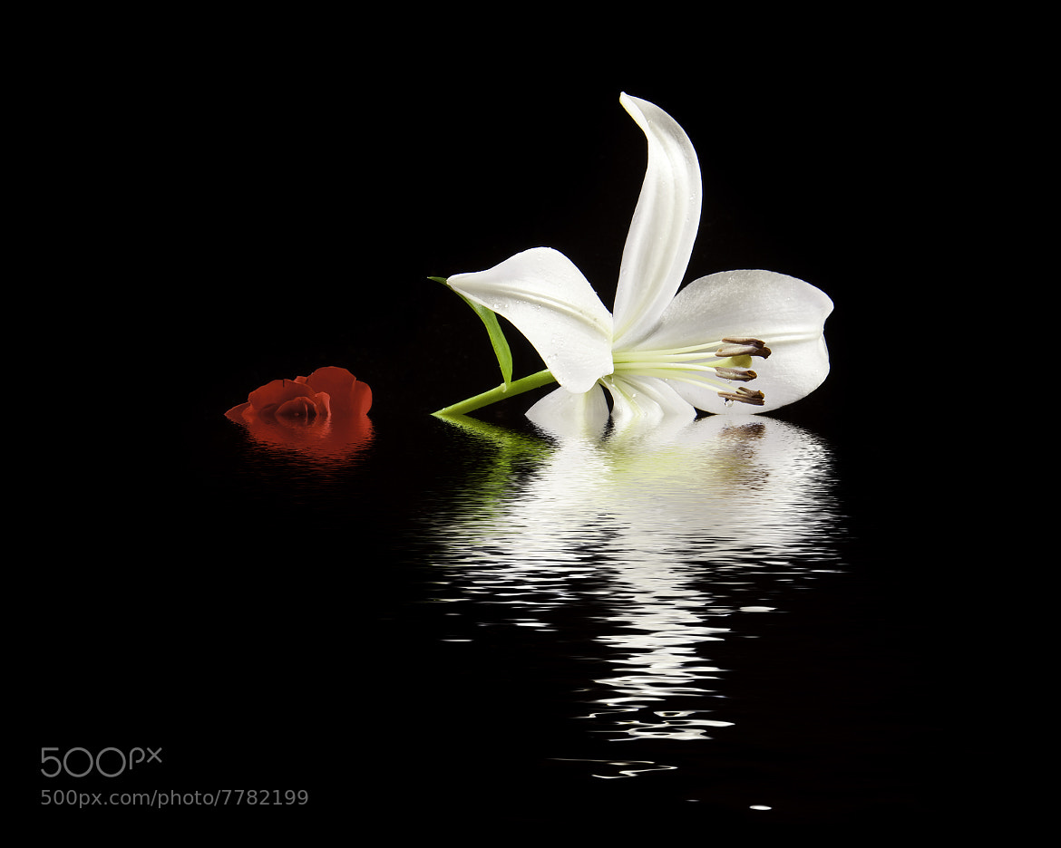 Photograph Rose and Lilly by Richard Steinberger on 500px