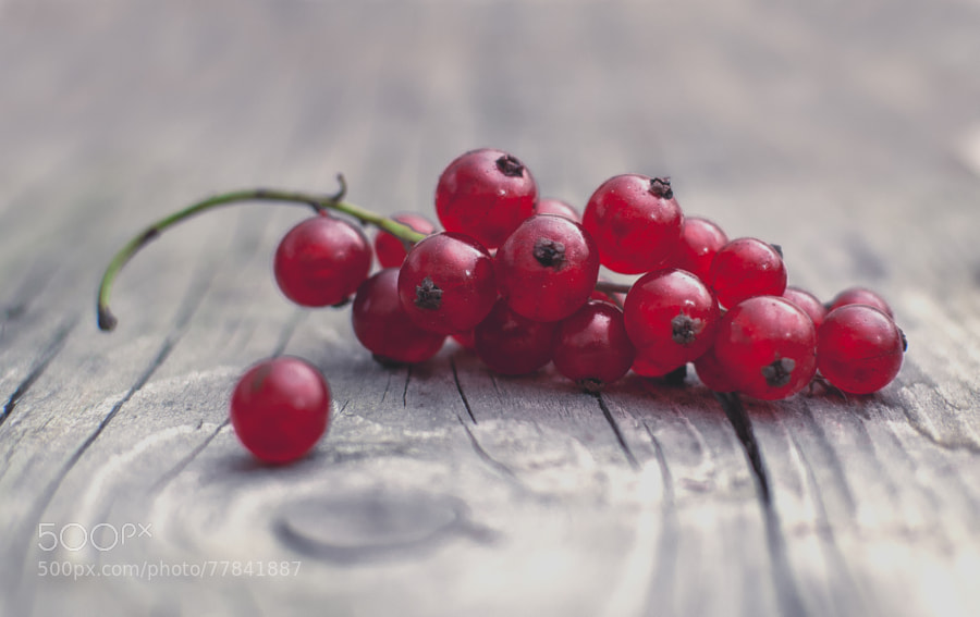 Photograph Currant by Balázs Ferenc on 500px