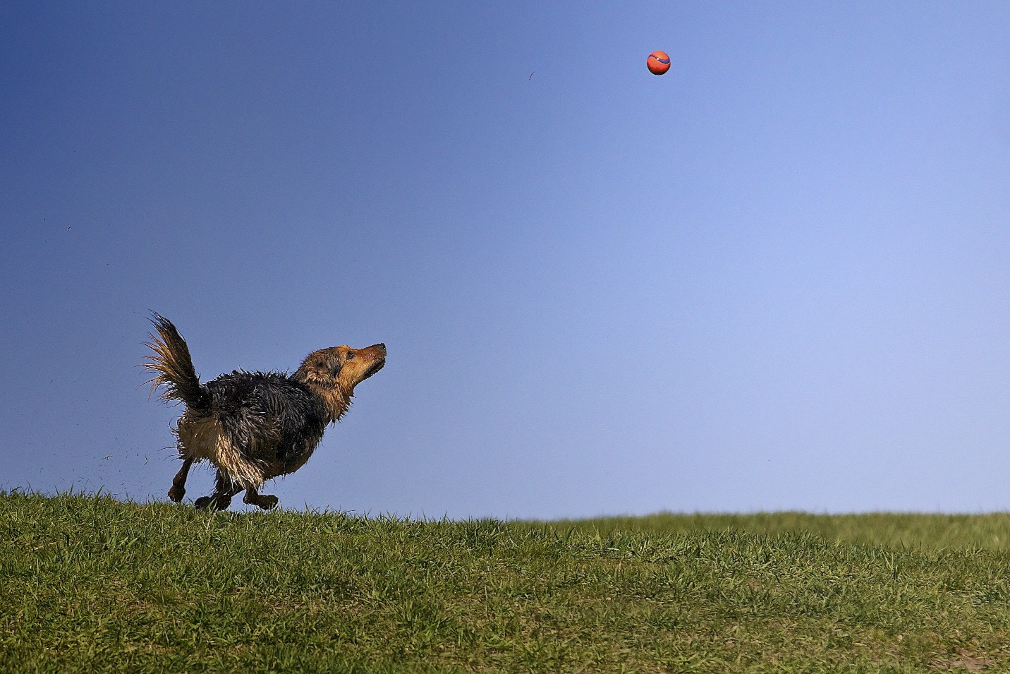 Photograph Sookie in the sky by Florian Rudolph on 500px