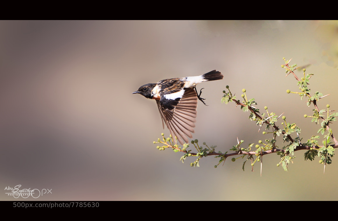 Photograph The Early Bird Traveler by Abu  Swailem on 500px
